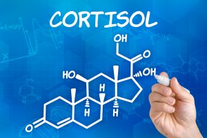 How Cortisol Regulates Many Functions of the Body