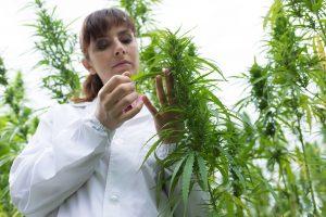 The Healing Power of CBD and CBD Oil—How Cannabinoids Help